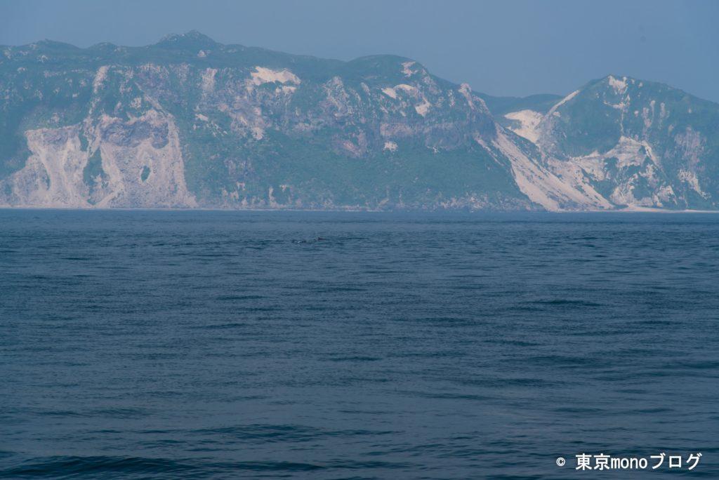 式根島-イルカ