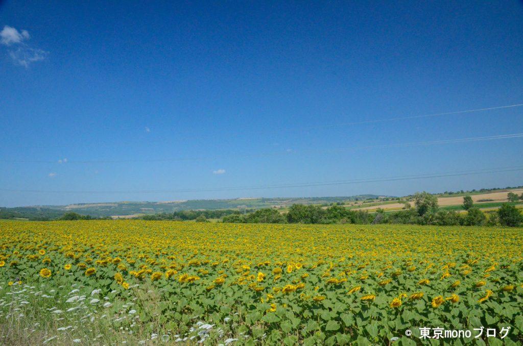 トルコのひまわり畑