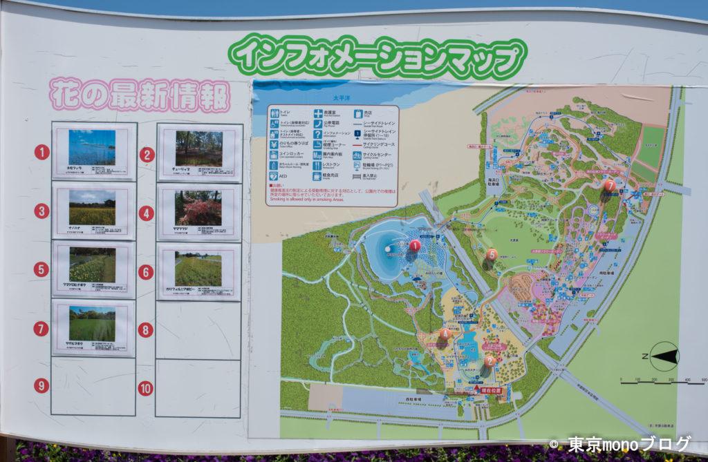 国営ひたち海浜公園の花の開花情報