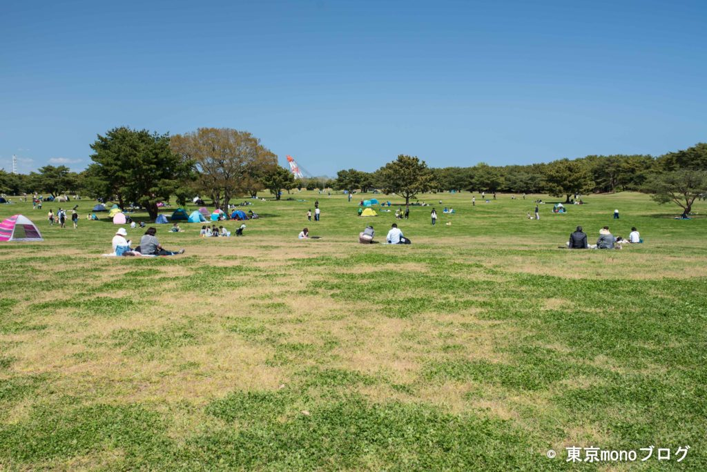 国営ひたち海浜公園の大草原エリア
