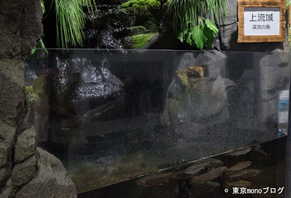 加茂水族館 川魚
