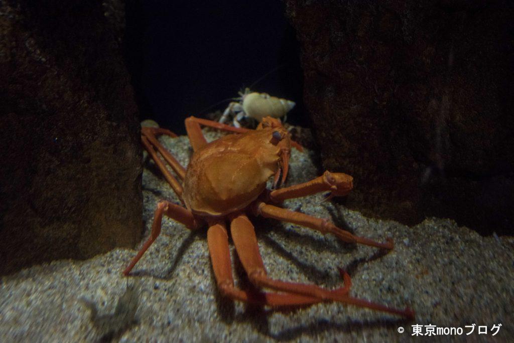加茂水族館 カニ