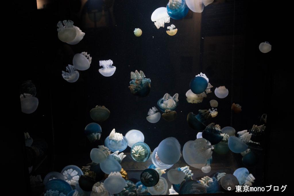 加茂水族館 カラフルなクラゲ