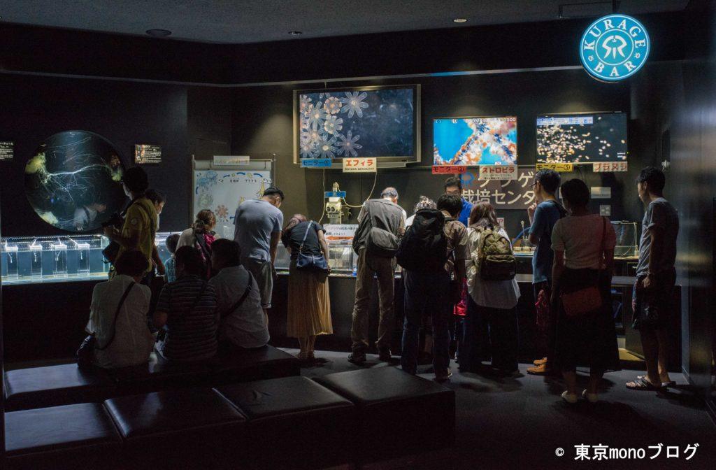 加茂水族館 クラゲ解説コーナー